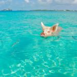 In BUSINESS CLASS from Germany to the Bahamas from only €1,547 (round-trip)